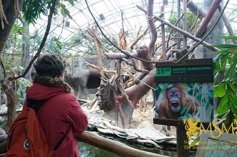 Екскурсія в зоопарк і аквапарк